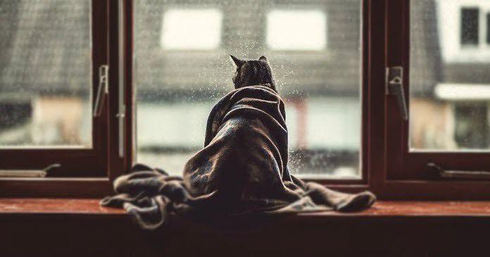 adios-a-un-gato