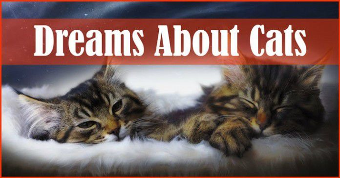 dreams about cats - what does it means?