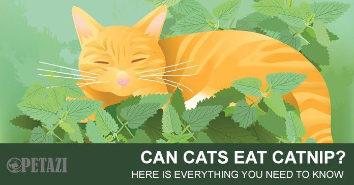 Can cats eat catnip?