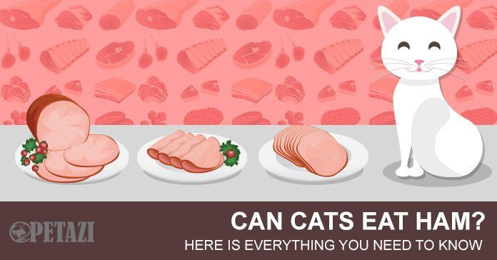 Can cats eat ham?