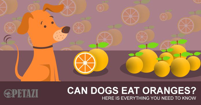 Can dogs eat oranges - petazi.com