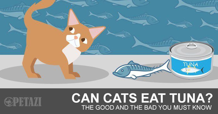 Can cats eat tuna