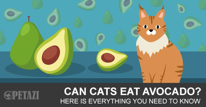 Can Cats Eat Avacados