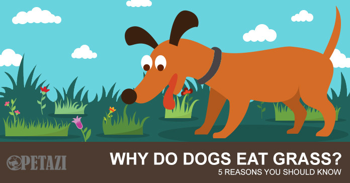 Why Dogs Eat Grass And Weeds