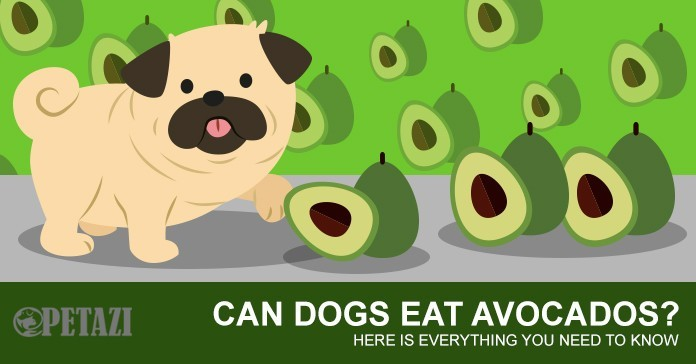 Can dogs eat avocado - are avocados bad for dogs?