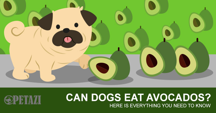 Can Dogs Have Avocado