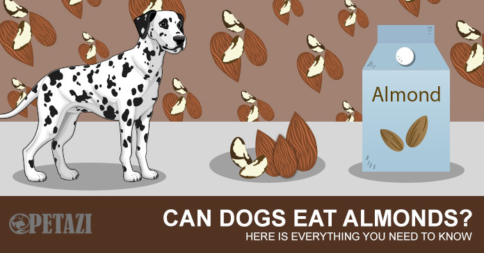 Can dogs eat almonds - your best answer here