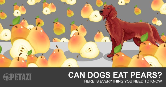 Can dogs eat pears - your best answer can be found here