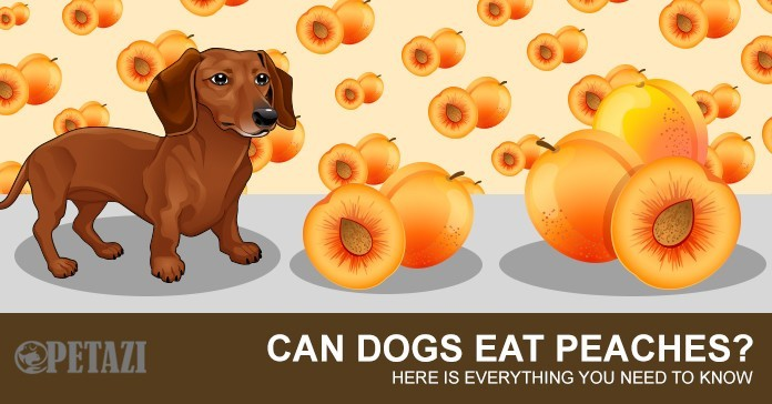 Can Dogs Eat Peaches - Your best answer can be found here