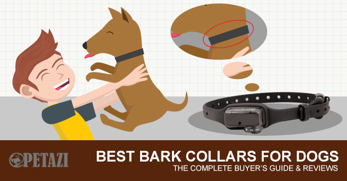 best bark collar 2017 - best bark collar for dogs