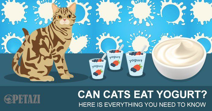 Can cats eat yogurt