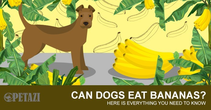 Can Dogs Eat Bananas - are bananas good for dogs