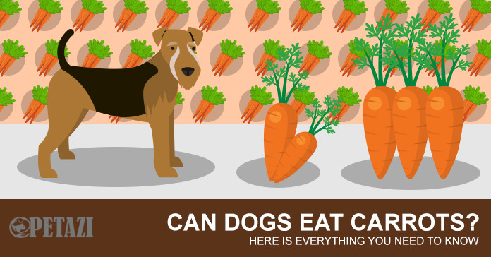 Can dogs eat carrots? are carrots good for dogs