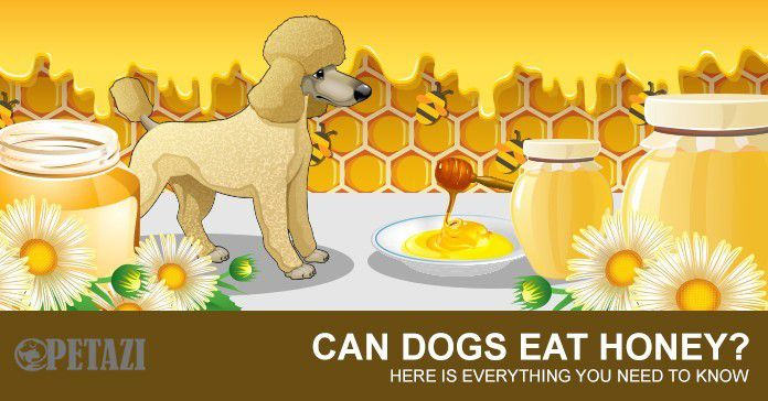 can dogs eat honey - can dogs have honey - is honey good for dogs?