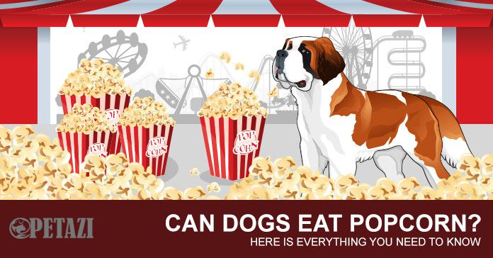 can dogs eat popcorn - can dogs have popcorn
