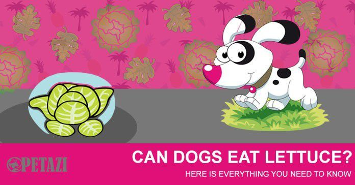 can dogs eat lettcue - is lettuce good for dogs