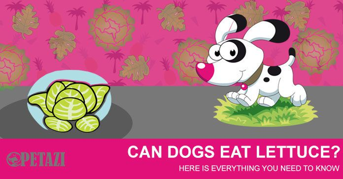 can dogs eat lettuce - is lettuce good for dogs