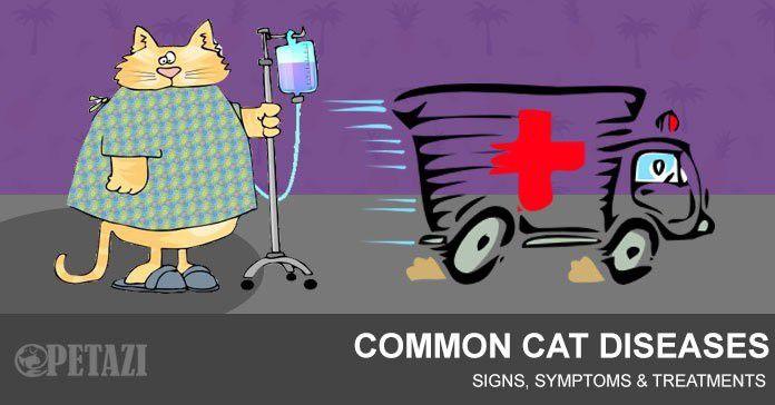 Common cat diseases - cat symptom checker