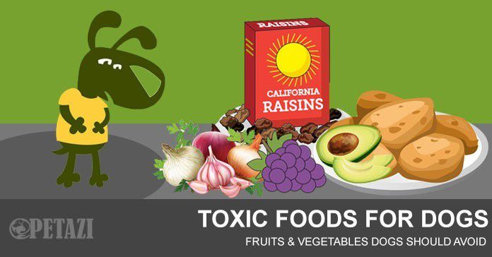 what foods are toxic to dogs - toxic foods for dogs