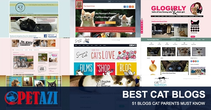 best cat blogs