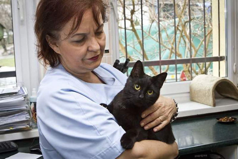 cat_nurses_other_animals_back_to_health