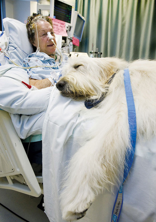 hospital-pets-allowed-animal-therapy-zacharys-paws-for-healing